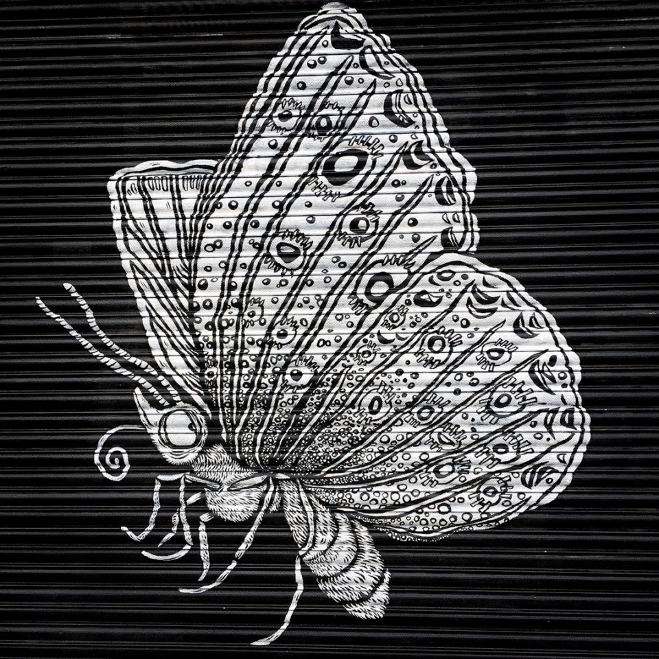 Black and white butterflies painted on shop front shutters
